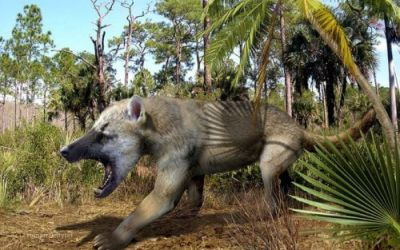 From unknown to beardog: Findings rescue fossils from 'trashbin' genus