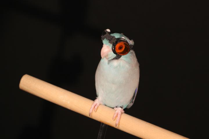 birds-flying-through-laser-light-reveal-faults-in-flight-research