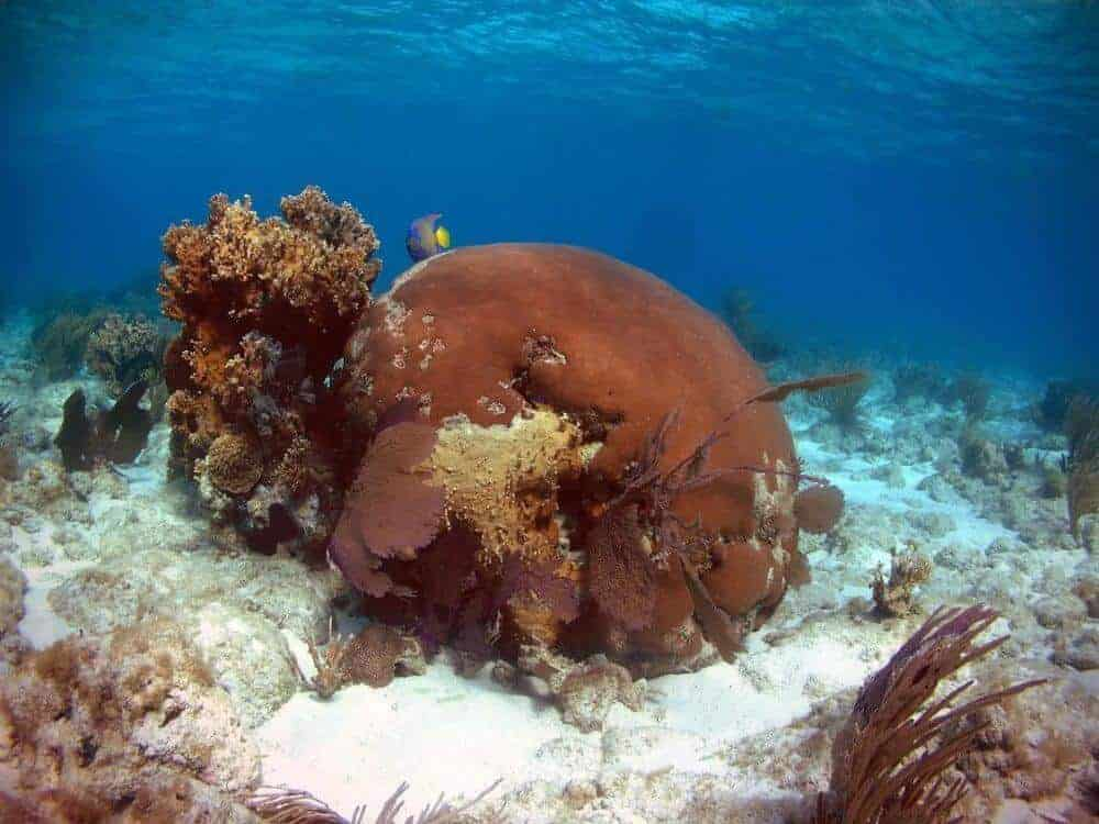 Florida Corals Tell of Cold Spells and Dust Bowls Past, Foretell Weather to Come