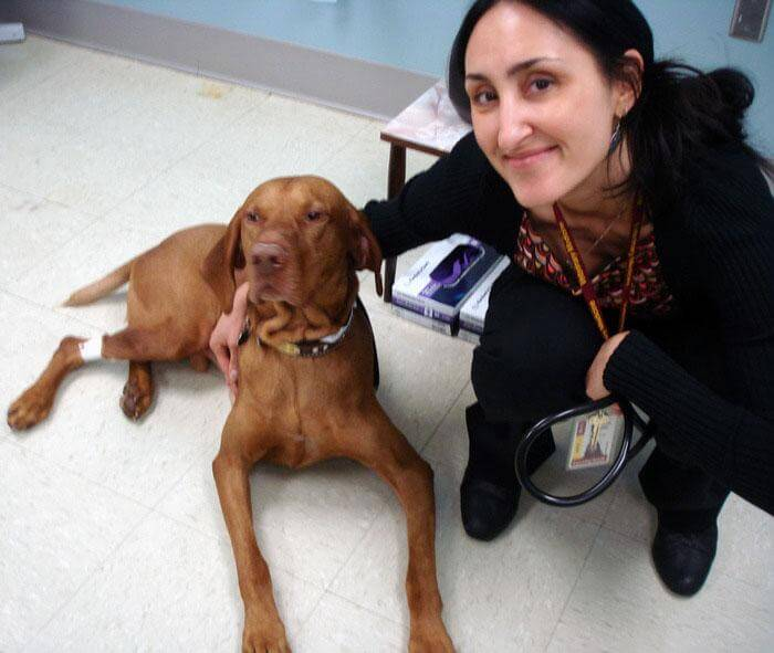 Drug developed at University of Minnesota increases survival in dogs with cancer