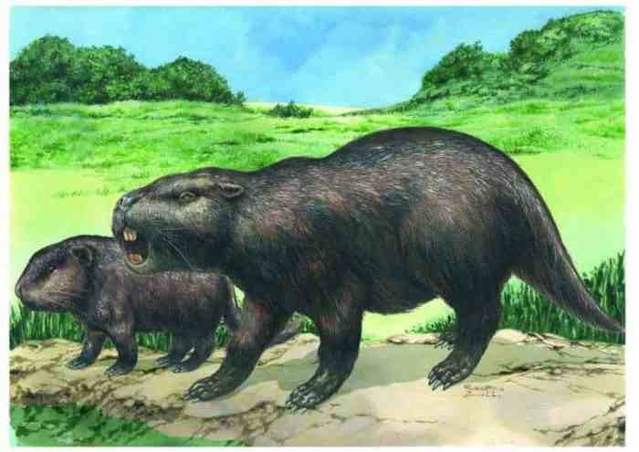 Rare fossil discovery raises questions