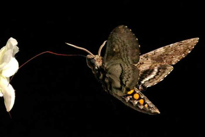 The value of nutrition and exercise, according to a moth