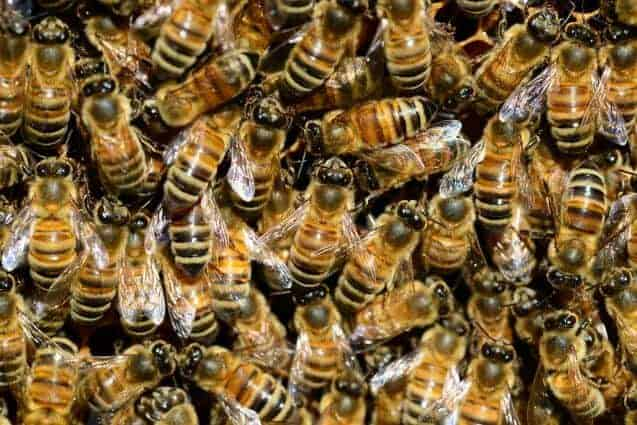 Despite few taste genes, honey bees seek out essential nutrients based on season