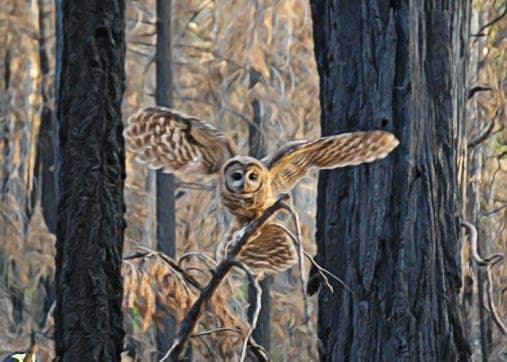 The Science of Forest Fire and Spotted Owls
