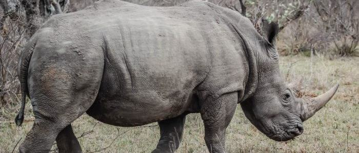 Illegal wildlife trade growing on the dark web