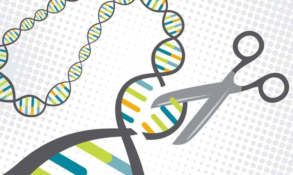 Early gene-editing success holds promise for preventing inherited diseases