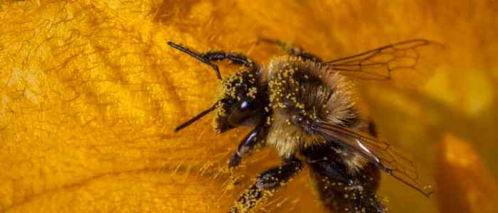 To Buzz or to Scrabble? To Foraging Bees, That's the Question