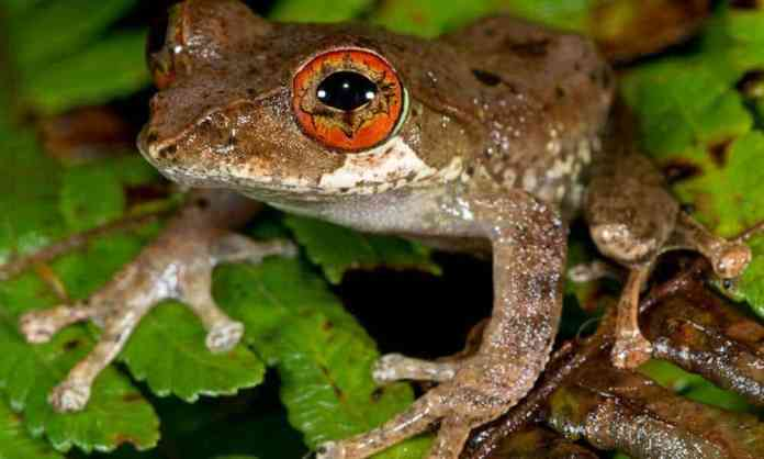 Mass Extinction Triggers Golden Age of Frogs