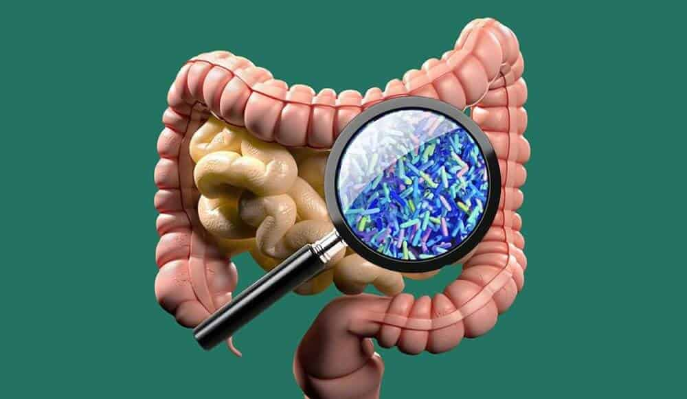 Diet matters less than evolutionary relationships in shaping gut microbiome