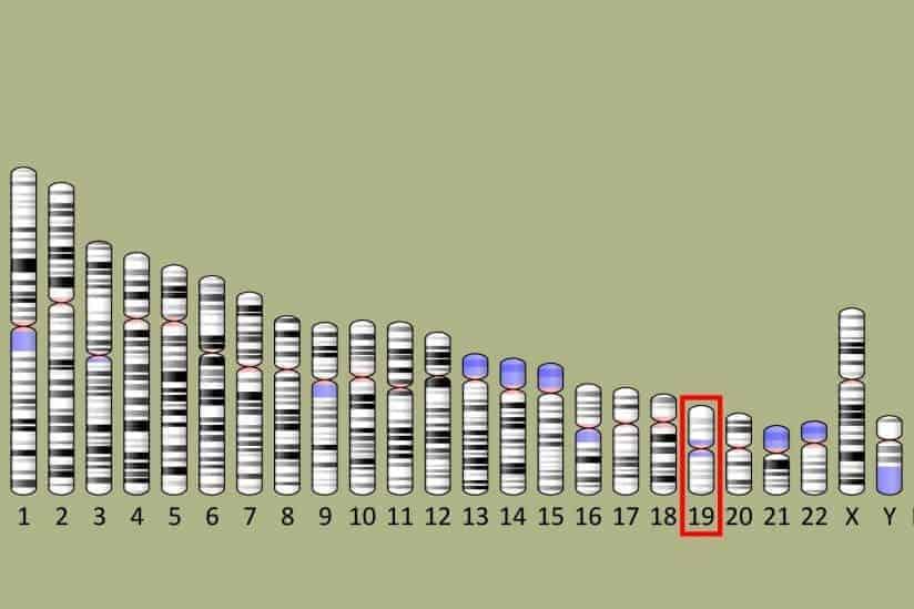 Researcher Identifies Risk Genes for ALS
