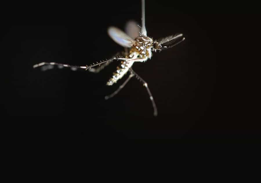 Swatting mosquitoes teaches them to leave you alone