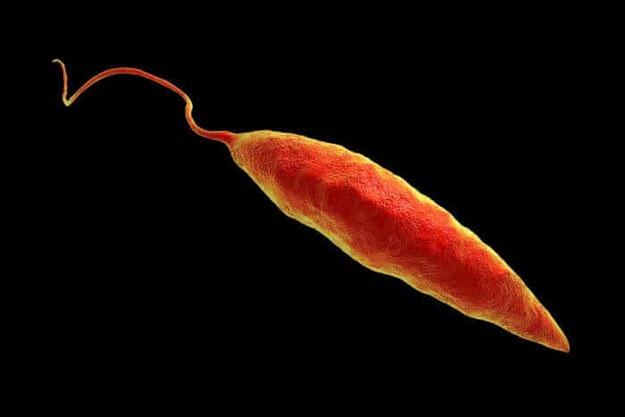 Viruses exacerbate disease caused by Leishmania parasite