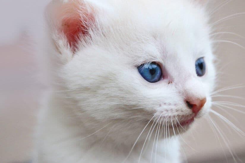 USDA Ending 'Taxpayer-Funded Kitten Slaughter'