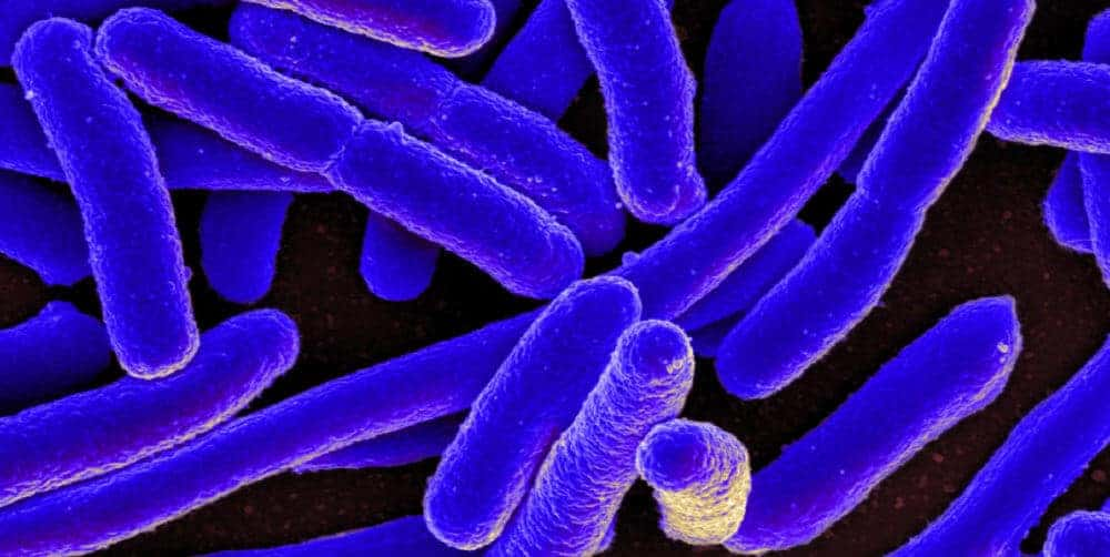 Colonoscopies lead to many more infections than previously thought
