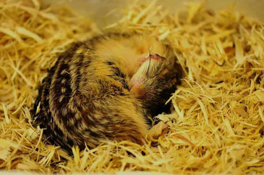 Researchers develop 'hibernation in a dish' to study how animals adapt to the cold
