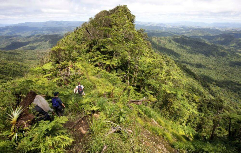 Fiji field work flies out with new species