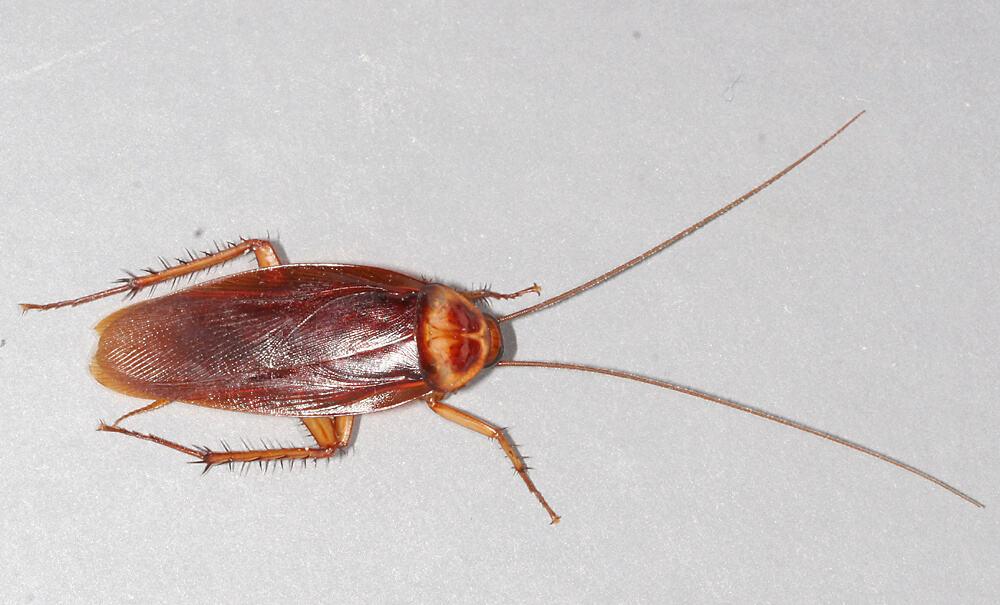 Next-generation robotic cockroach can explore underwater environments