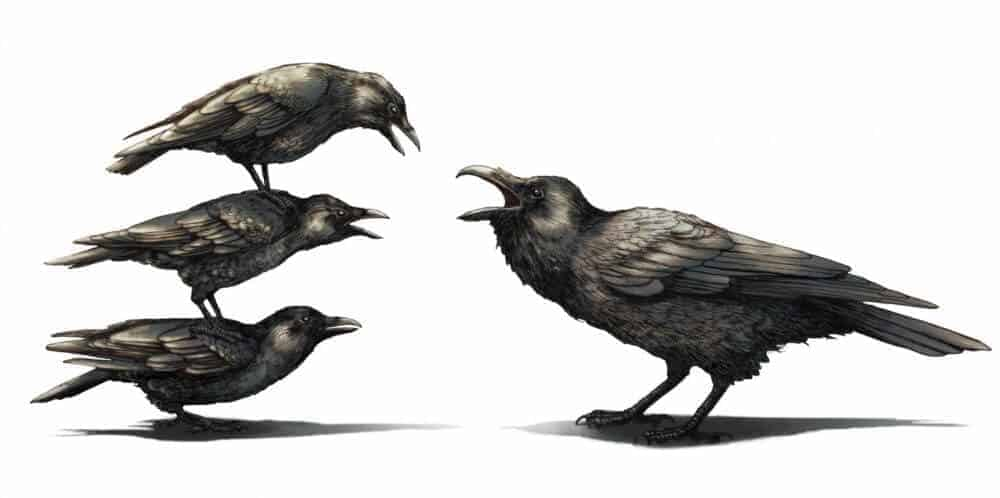 Crows are always the bullies when it comes to fighting with ravens
