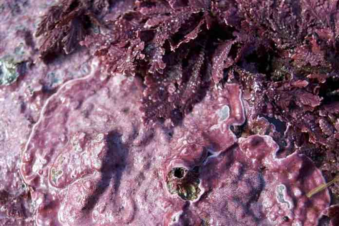 Slimy chemical clues- Changing algae could alter ecosystems