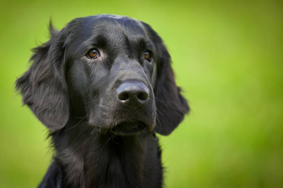 What would your dog do to help if you were upset? Quite a bit, study finds
