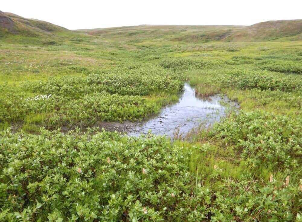 New Study: The Arctic Carbon Cycle is Speeding Up