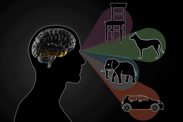 How the brain distinguishes between objects