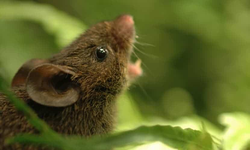 Common chemical linked to rare birth defect in mice