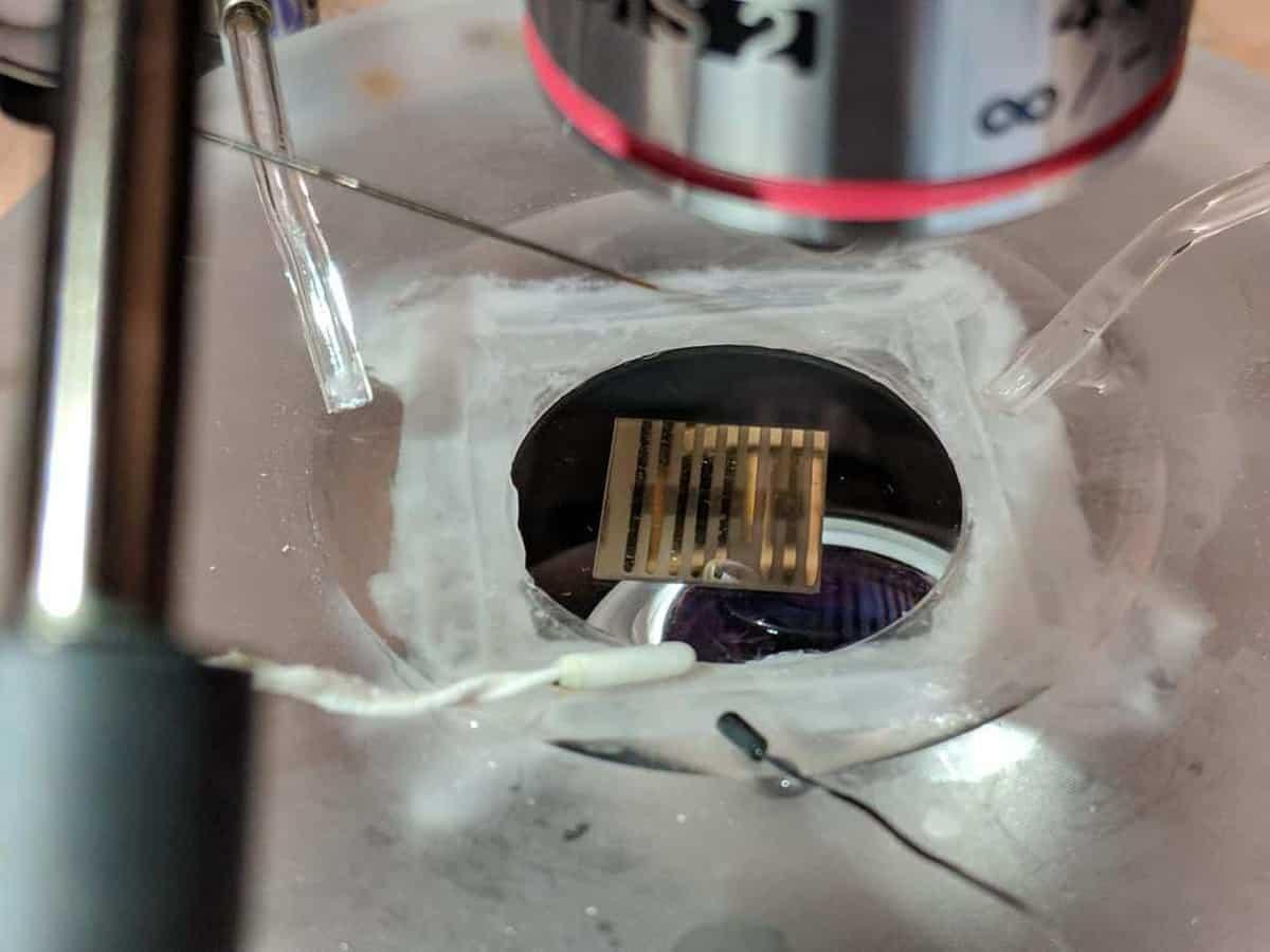 New quantum material could warn of neurological disease