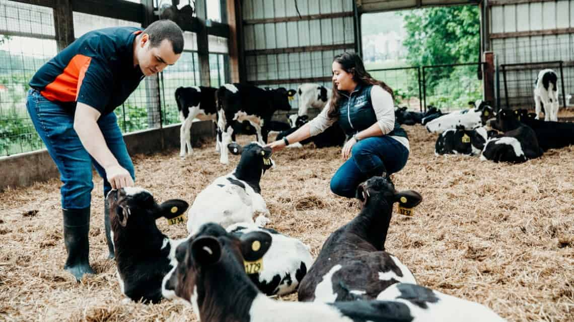 Helping heat-stressed dairy cows weather increasing temperatures