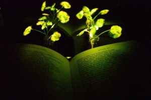 Ambient plant illumination could light the way for greener buildings