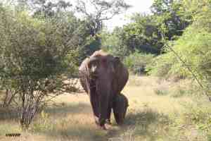 Scientists propose rethinking 'endangered species' definition to save slow-breeding giants