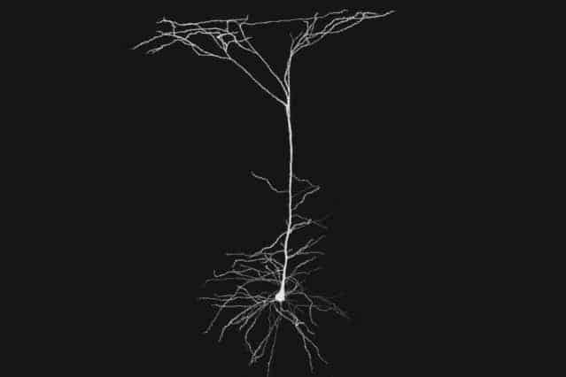 Neurons' 'antennae' are unexpectedly active in neural computation