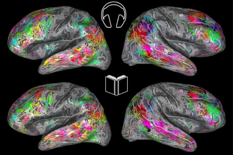 A map of the brain can tell what you're reading about