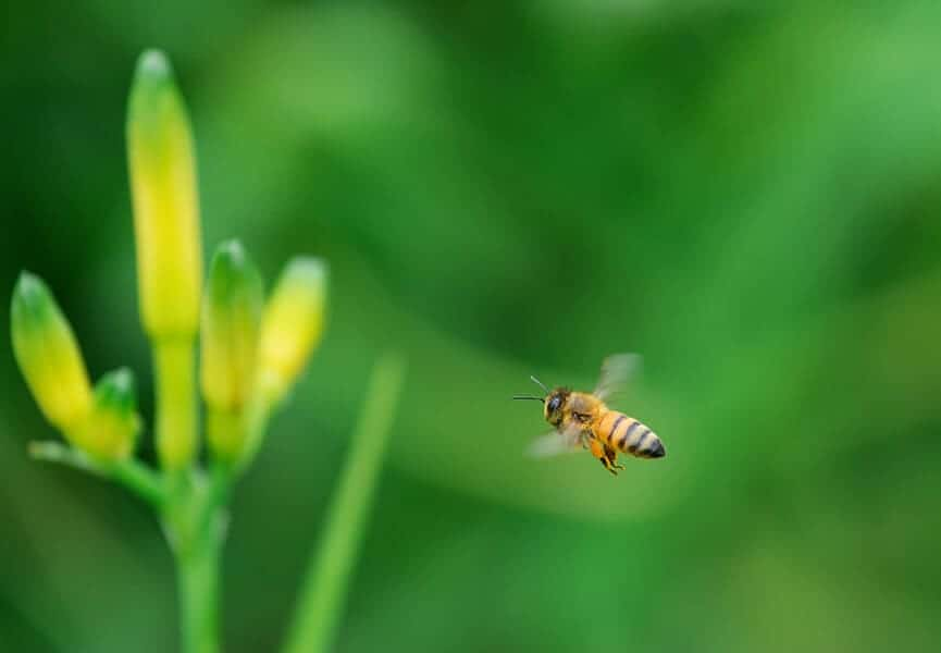Researchers developing natural pesticide that won't harm bees