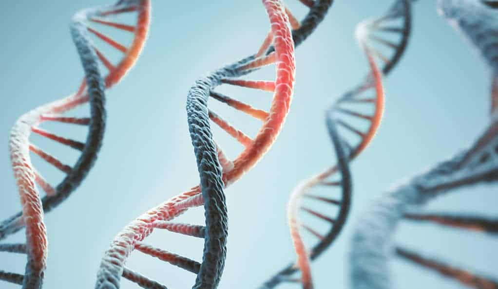 Researchers show how age can damage DNA