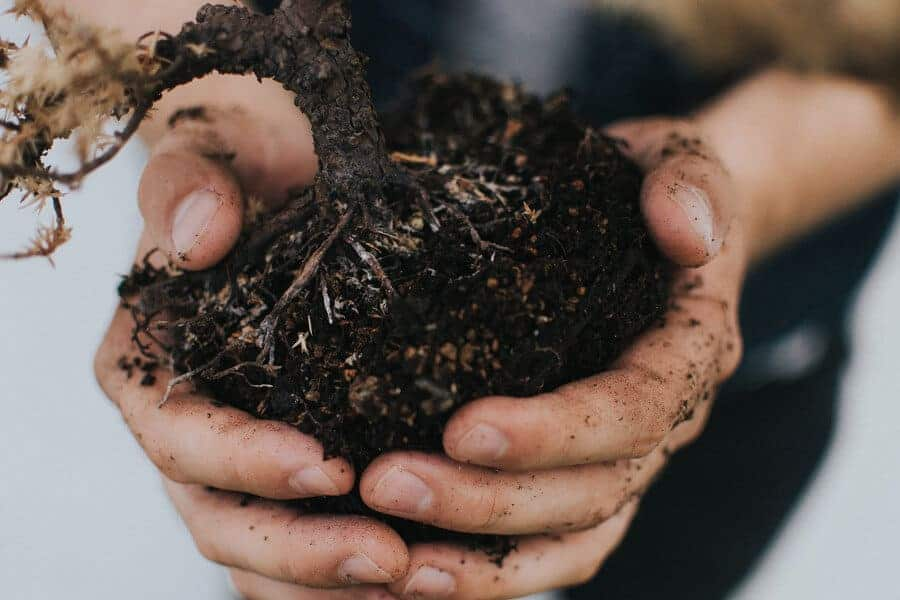 How a biofriendly fertilizer could offer a greener way to grow plants