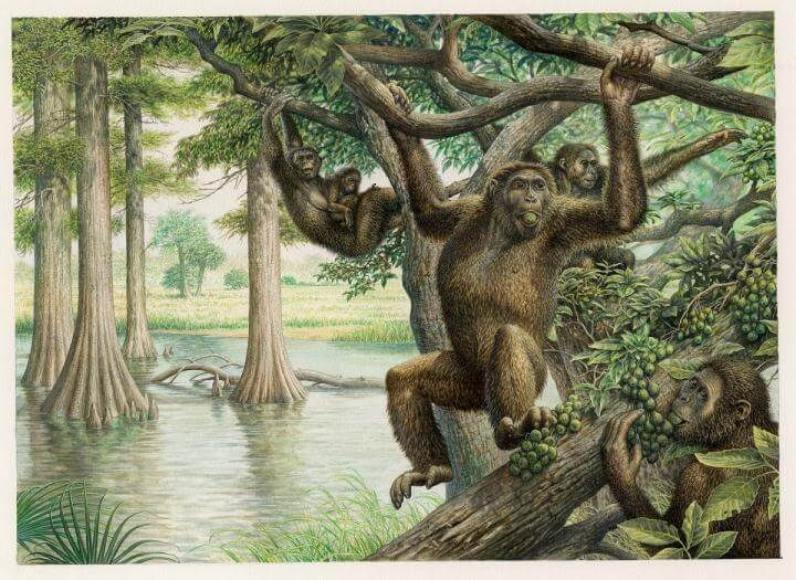 Rare Hungarian fossil gives new view on human evolution