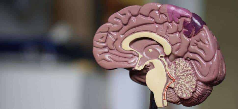 Researchers find regulator for brain injury's first responder