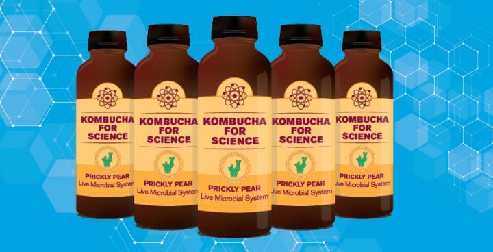 The kombucha culture
