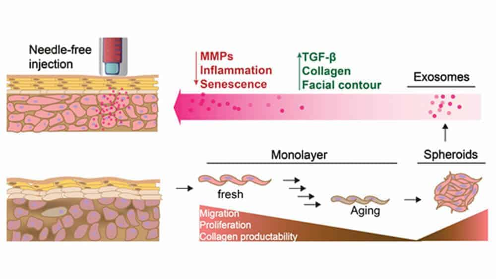 Suntanner, heal thyself: Exosome therapy may enable better repair of sun, age-damaged skin