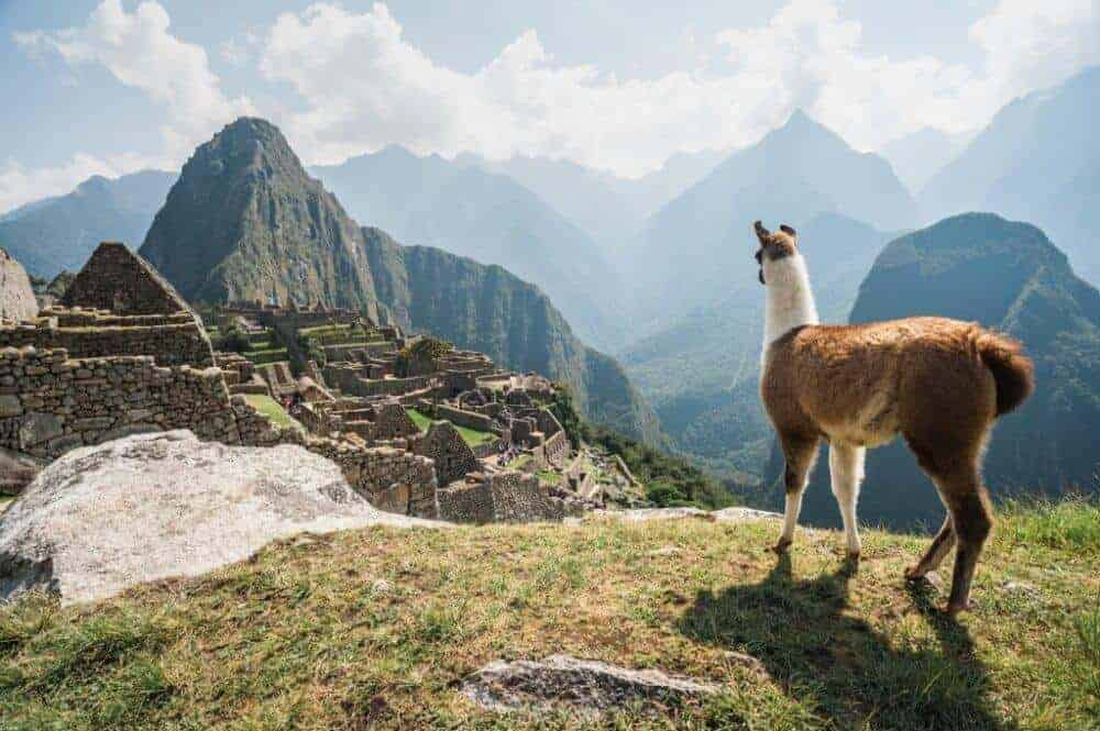 Why is Earth so Biologically Diverse? Mountains Hold the Answer