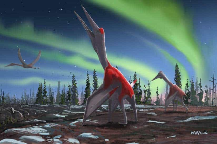 Look, up in the sky! A new species of giant flying reptile