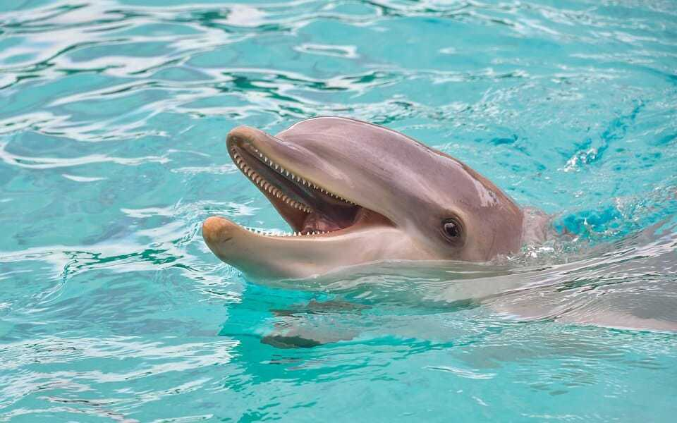 Antibiotic resistance surges in dolphins, mirroring humans