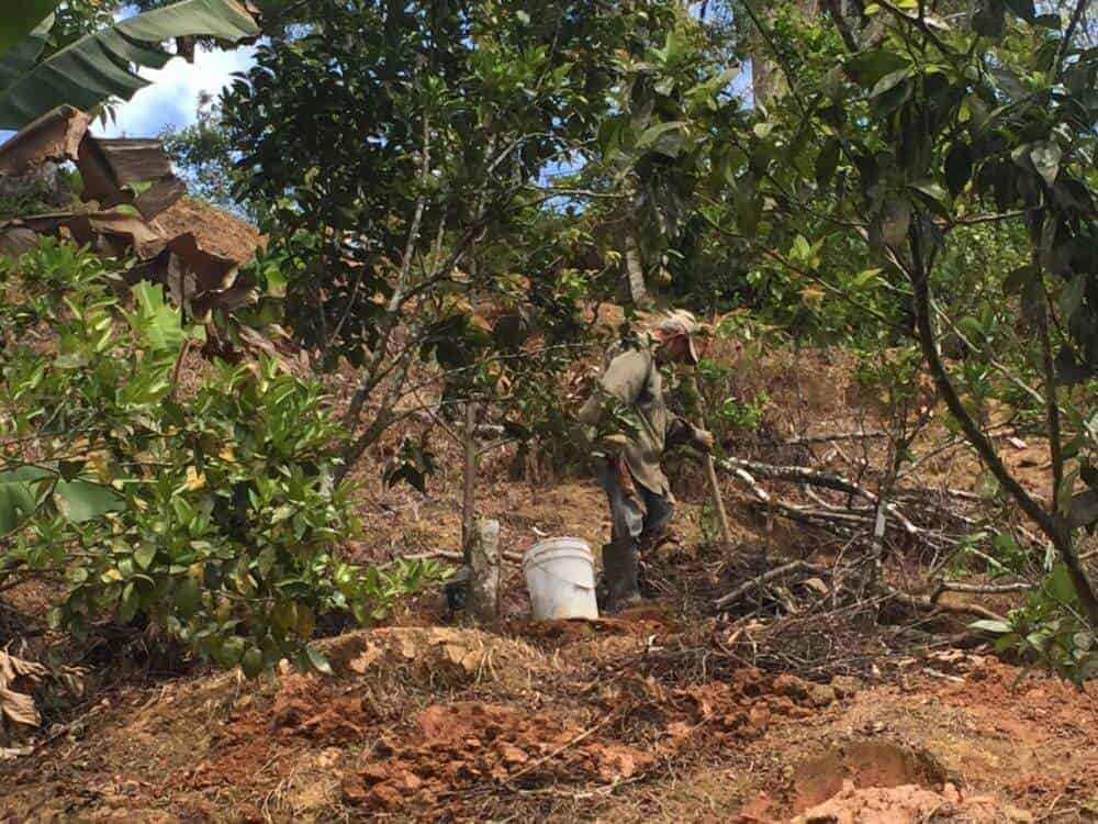 Damages to Puerto Rican coffee farms from Hurricane Maria varied widely