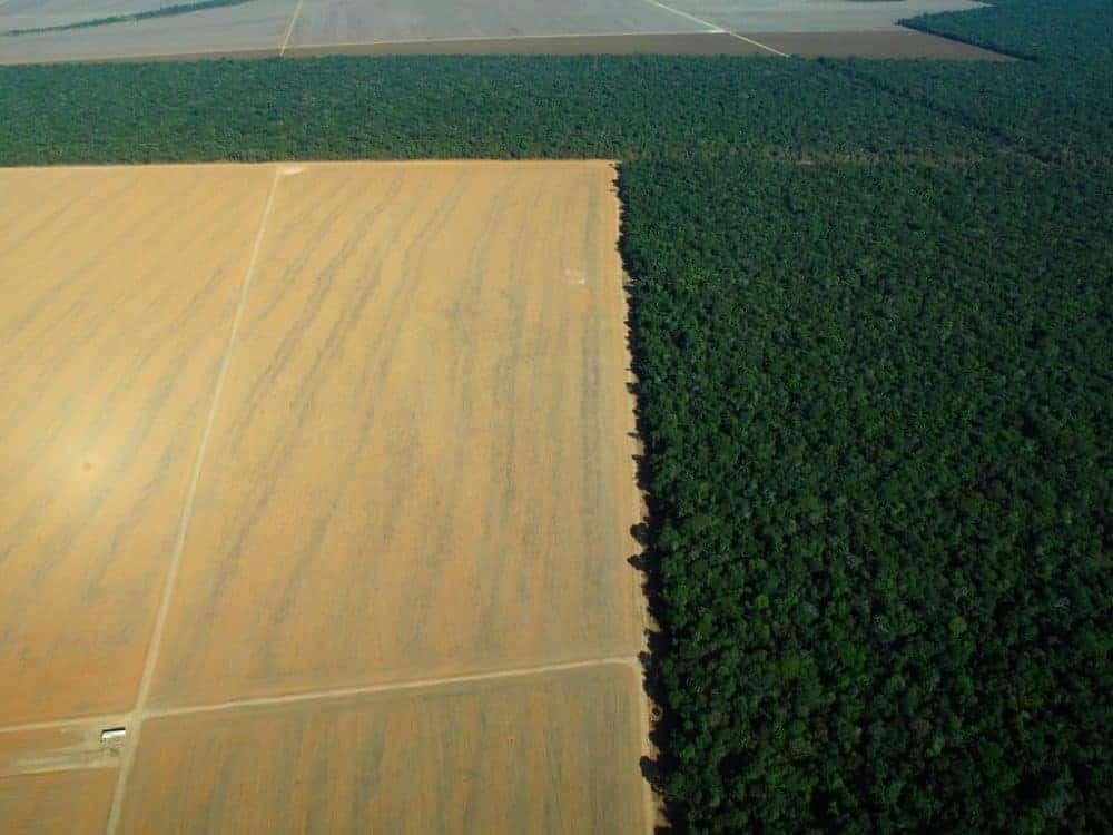 The Disease of Deforestation