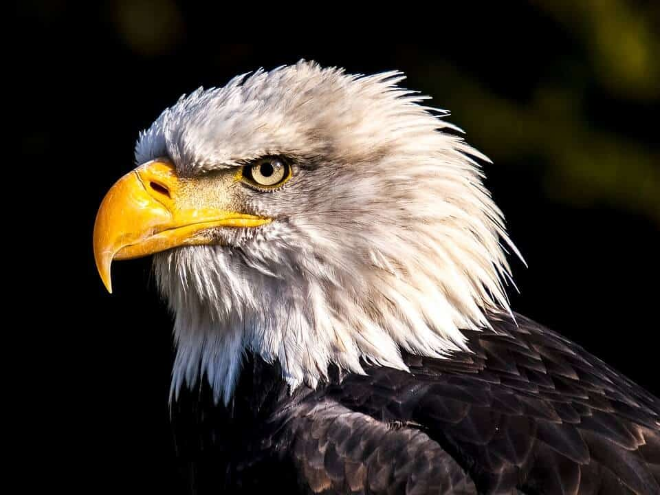 Newly discovered virus infects America's national symbol