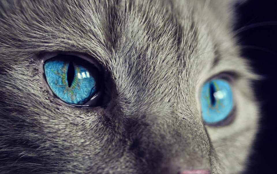 Vision technology views life through the eyes of animals