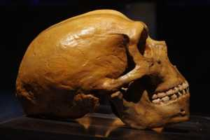 A new perspective on the genomes of archaic humans