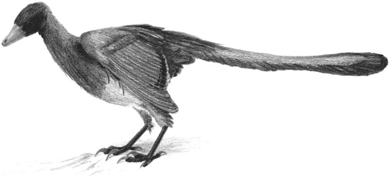 i-65c8d6d910372445ee5b58c4491aa2eb-Archaeopteryx_Spindler2005s.jpg