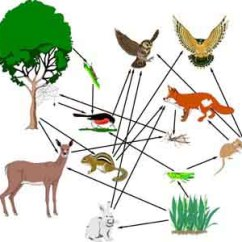 Tropical Rainforest Food Web Diagram 2 Amp Wiring What Is The Difference Between Chains And Webs?